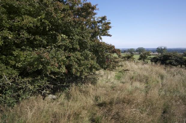 Acklington dyke boulder, Swarland NU163025
