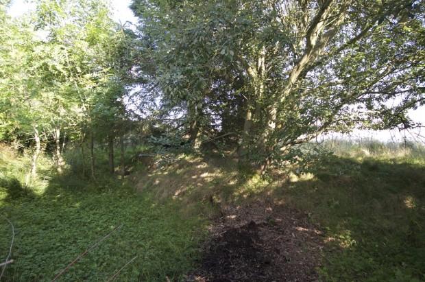 Vicinity of Acklington Dyke, Swarland NU163025
