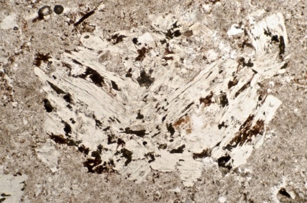 Sericite (white mica) in the highly altered rock at Location 2 viewed in plane polarised light.