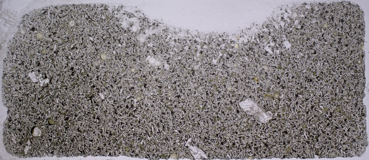 Thin section of tholeiite basalt boulder found halfway up the bank at  NZ 2161 8628 viewed in plane polarised light.