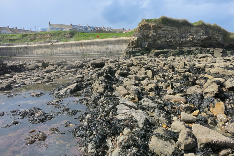 The Seaton Sluice dyke at Seaton Sluice, NZ 339766