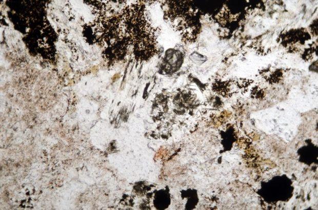 Amphibole and muscovite in medium-grained granite at location 1, Harthope Burn viewed in plane polarised light