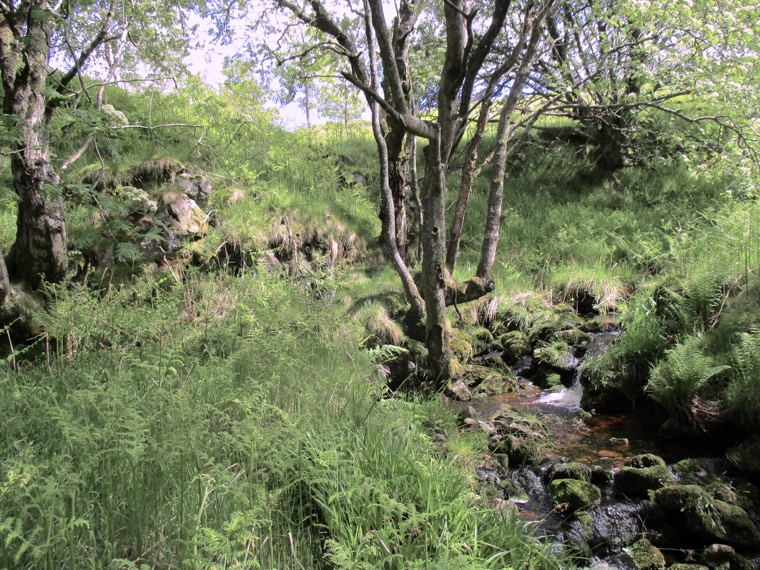 Granitic outcrop to the left of the tributary to the Lambden Burn beneath Woolhope Crag