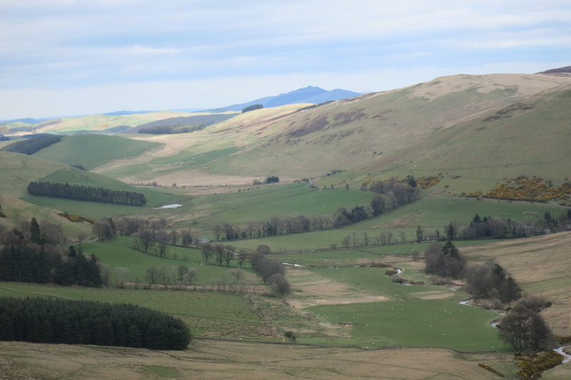 View towards Rubers Law from Grey Hill