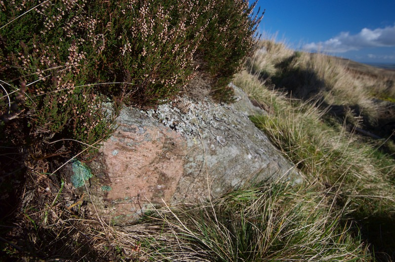 Felsic intrusion into coarse-grained Central Belt rock at Rig Cairn (NT940168)