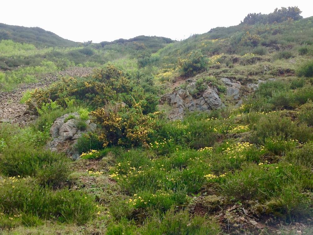Outcrops where the Cheviot pluton outcrops adjacent to the lavas, Lambden Burn NT922231