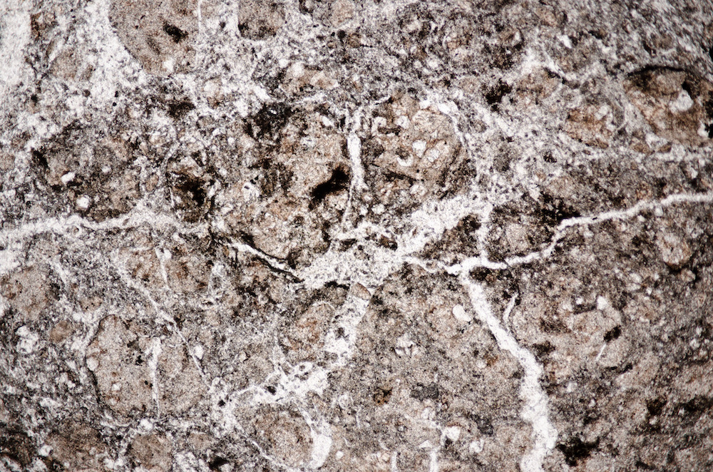 Silica veins in granitic, andesitic brecciated rock, Lambden Burn. Section viewed in plane polarised light (FoV 4.6 x 3.0 mm)