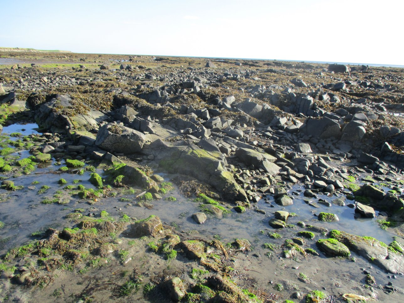 The Whin Sill at Boulmer