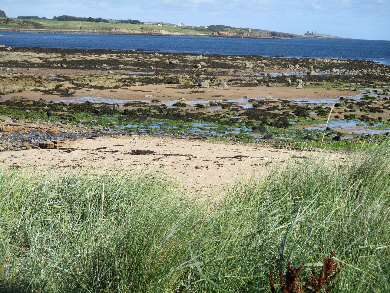 Looking North across Howdiemont Bay towards Dunstanburgh Castrle