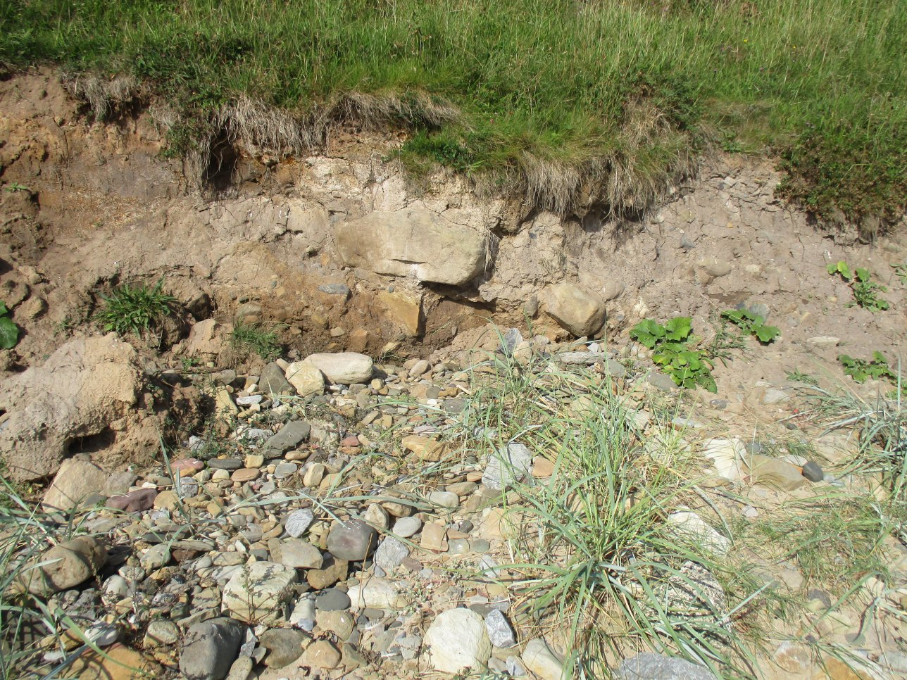 Upper Foxton Limestone