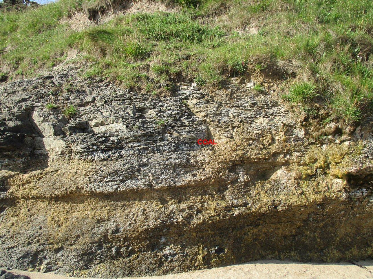 Coal seam above the Lickar limestone
