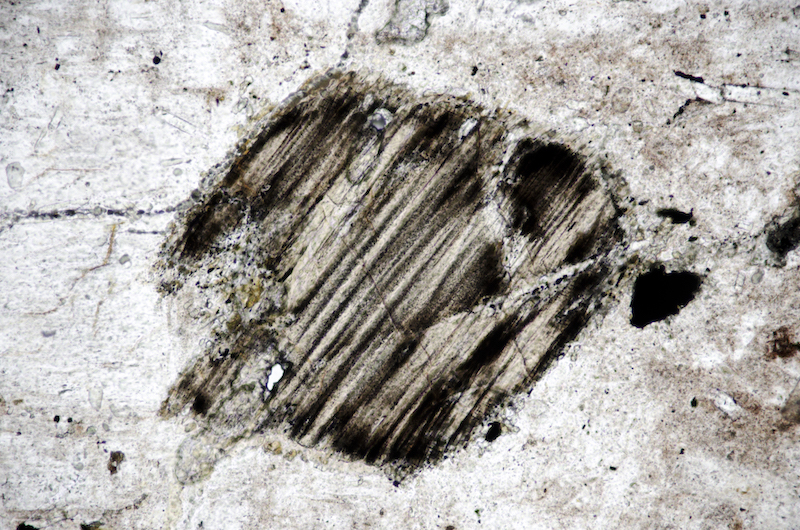 Hornblende. Section viewed in plane polarised light (FoV 1.2 x 0.8 mm)