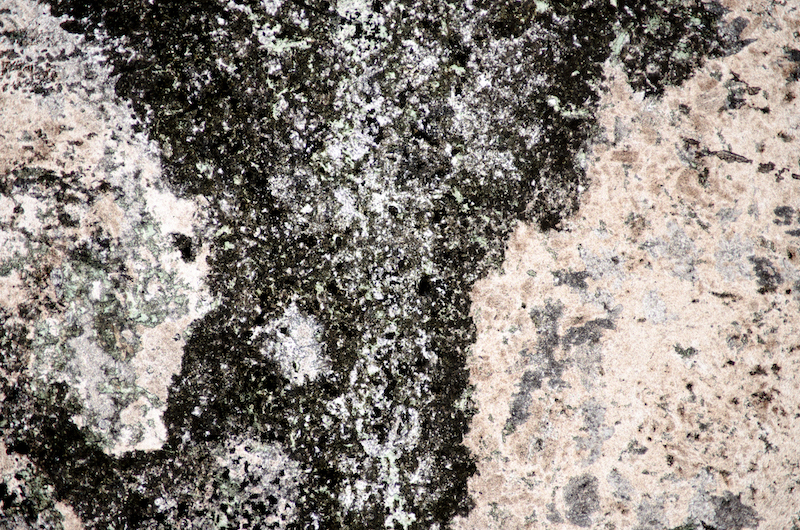 Chloritic, very mafic intrusion into carbonatised andesite. Section viewed in plane polarised light (FoV 4.6 x 3.0 mm)