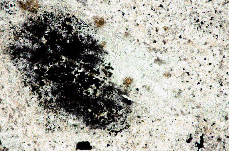 Acicular crystals, epidote, chlorite and Fe-Ti oxides resulting from alteration in carbonatised andesite. Section viewed in plane polarised light ((FoV 1.2 x 0.8 mm)